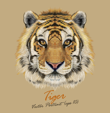 wild cat: Vector Portrait of a Tiger. Beautiful face of big cat.
