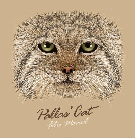 pallas: Vector Portrait of a Manul Cat. Pallas Cat. Wild cat.