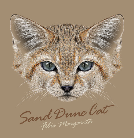 carnivores: Vector Portrait Sand Dune Cats. Small Wild Cat living in the desert.