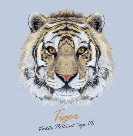 tigre blanc: Vector portrait d'un tigre sur fond bleu. Beau visage de grand chat.