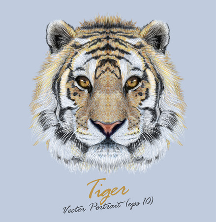 Vector Portrait of a Tiger on blue background. Beautiful face of big cat. Stok Fotoğraf - 44312099
