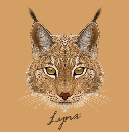 Vector portrait of Lynx cat.