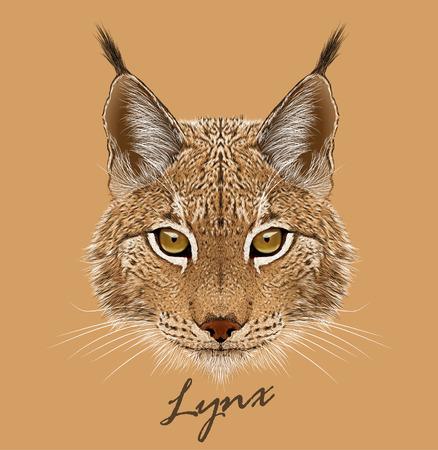 lynx: Vector portrait of Lynx cat.