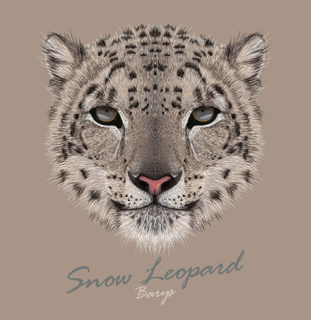 Vector Portrait of a Snow Leopard