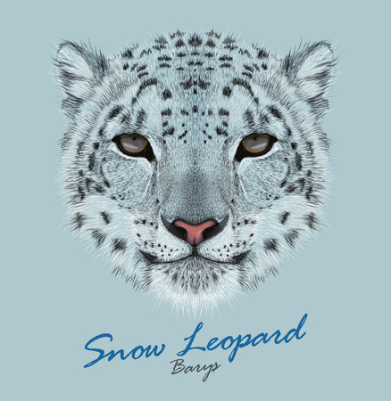 Vector Portrait of a Snow Leopard. Irbis or Barys in winter.