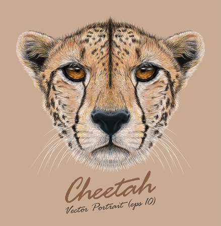 Vector Illustrative Portrait of a Cheetah. The cute face of a Cheetah.
