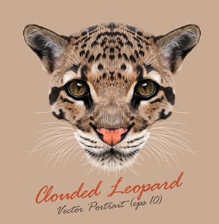 Vector Illustrative Portrait of Clouded Leopard. 向量圖像