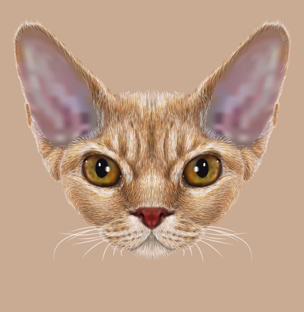 gazing: Portrait of Devon Rex Cat. Cute young orange domestic cat with yellow eyes.