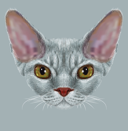 grey cat: Portrait of Devon Rex Cat. Cute young grey domestic cat with green eyes.