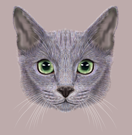 Illustration of Portrait of Russian Blue Cat. Cute Domestic Cat eith green eyes