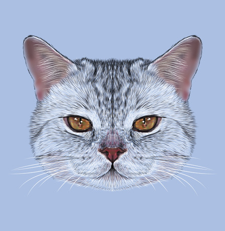 looking straight: Illustrative Portrait of Scottish Straight Cat. Cute domestic tabby cat with orange eyes.