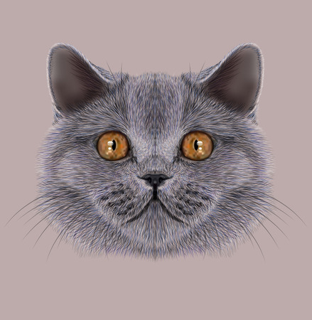 Illustration of Portrait British short hair Cat. Cute silver Domestic cat with orange eyes 스톡 콘텐츠