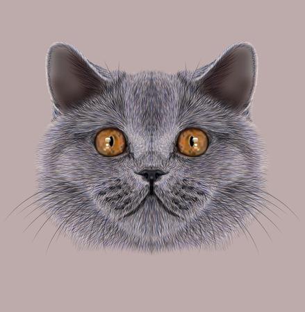 Illustration of Portrait British short hair Cat. Cute silver Domestic cat with orange eyes 免版税图像