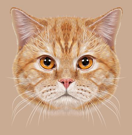肖像画英国短い髪猫のイラスト。銅の目でかわいいオレンジ色の国内猫