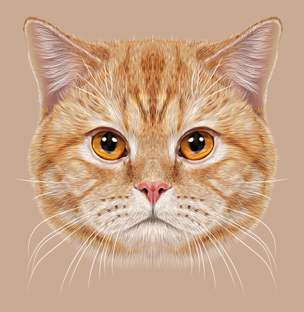 Illustration of Portrait British short hair Cat. Cute orange Domestic cat with copper eyes