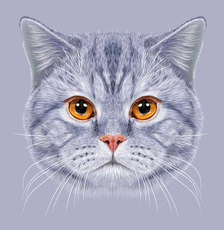 british short hair: Illustration of Portrait British short hair Cat. Cute grey tabby Domestic cat with orange eyes