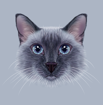siamese: Illustrative Portrait of a Thai Cat. Cute blue point Traditional Siamese Cat
