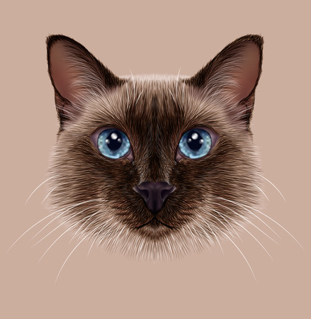 Illustrative Portrait of a Thai Cat. Cute seal point Traditional Siamese Cat
