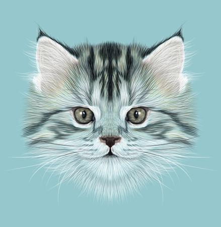 gray tabby: Illustrative Portrait of Domestic Kitten. Cute gray tabby kitten