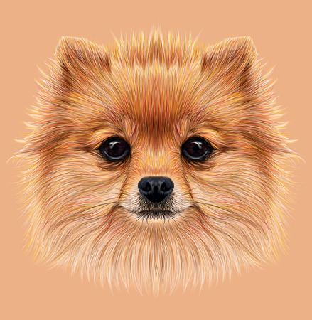 Illustrative Portrait of Pom Pom. Cute head of a sable Pomeranian Spitz Dog