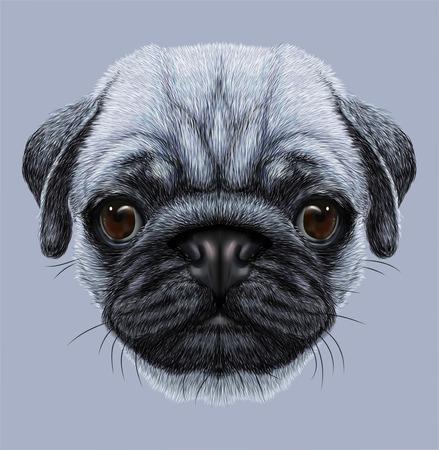 Illustrative Portrait of Pug Dog. Cute young dog on blue background