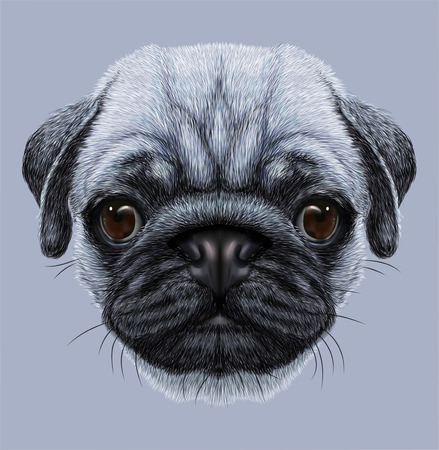 Illustrative Portrait of Pug Dog. Cute young dog on blue background