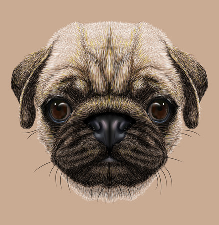 Illustrative Portrait of Pug Dog. Cute young dog. Banco de Imagens