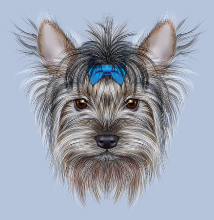 head shot: Illustrative Portrait of a Domestic Dog. Cute head of Yorkshire Terrier on blue background.