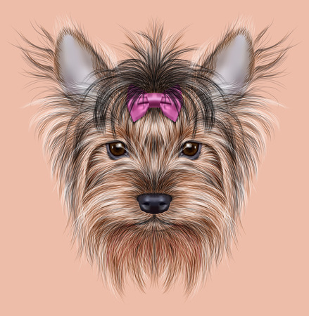 Illustrative Portrait of a Domestic Dog. Cute head of Yorkshire Terrier on pink background.