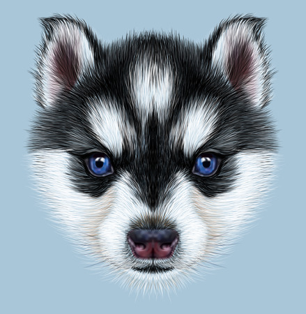 Illustrative Portrait of a Husky Puppy. Cute head of bicolor puppy with blue eyes.
