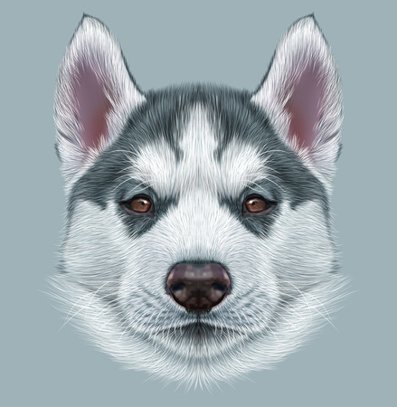 illustration and painting: Illustrative Portrait of Husky Puppy. Cute portrait of young gray bicolor dog with brown eyes.