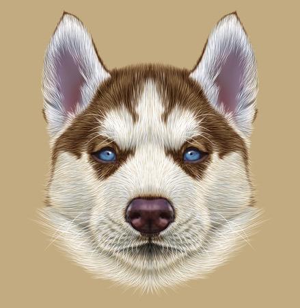 ハスキーの子犬の例示の肖像画。淡いブルーの目を持つ若い銅赤い二色犬のかわいい肖像画。