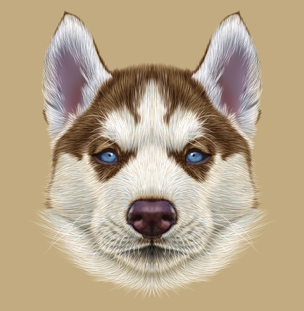Illustrative Portrait of Husky Puppy. Cute portrait of young copper red bicolor dog with pale blue eyes.