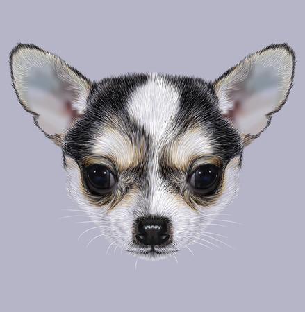 예시적인 치와와 강아지의 초상화입니다. 귀여운 검은 색의 작은 개. 스톡 콘텐츠