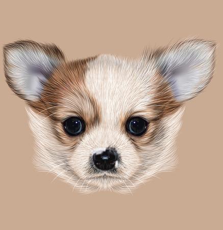 Illustratief Portret van Chihuahua pup. Schattig lang haar tweekleurige Puppy.