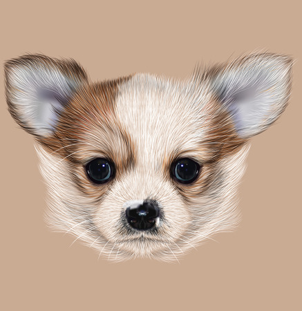 Illustrative Portrait of Chihuahua Puppy. Cute long hair bi-color Puppy.
