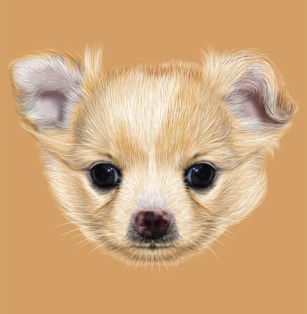 chihuahua puppy: Illustrative Portrait of Chihuahua Puppy. Cute white puppy with apricot spots on skin.