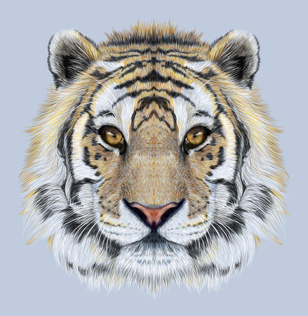 Portrait of a Tiger on blue background. Beautiful face of big cat.