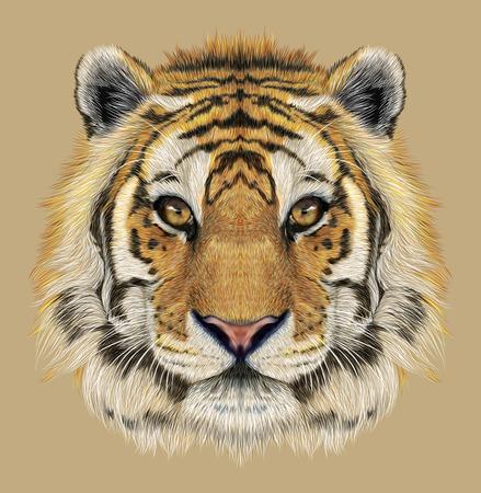 tigre blanc: Portrait d'un tigre. Beau visage de grand chat. Banque d'images