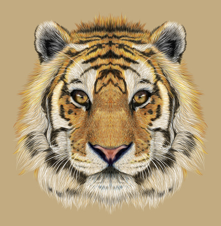 natural face: Portrait of a Tiger. Beautiful face of big cat. Stock Photo