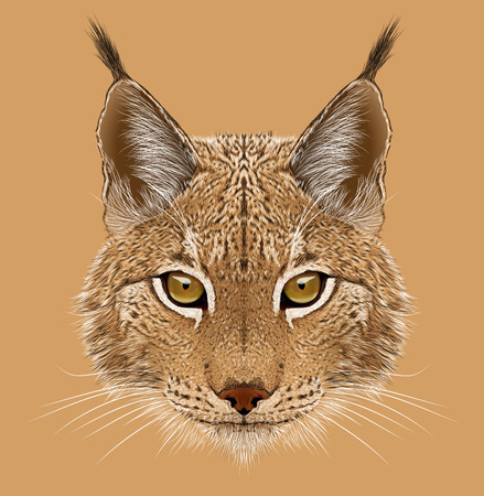 Illustrative portrait of Lynx. Cute wild cat of Eurasia.