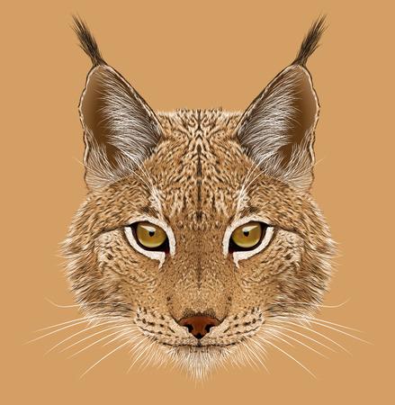 Illustrative portrait of Lynx. Cute wild cat of Eurasia.