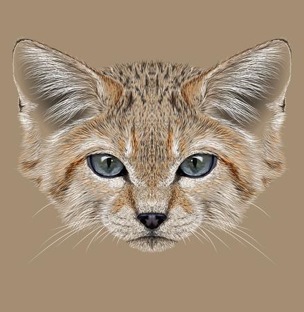 dune: Illustrative Portrait of Sand Dune Cat. Wild Cat with cute face. Felis Margarita.