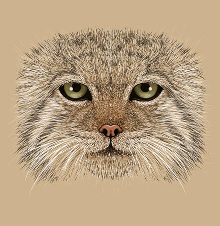 pallas: Illustrative Portrait of Pallas Cat. Wild Cat with green eyes. Felis Manul.