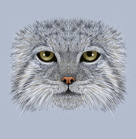 pallas: Illustrative Portrait of Pallas Cat. Wild Cat in winter coat. Felis Manul.