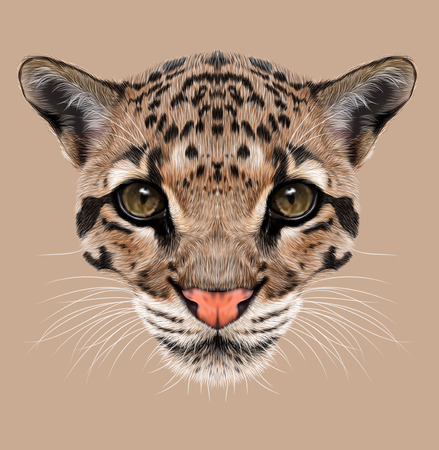 clouded leopard: Illustrative Portrait of Clouded Leopard.