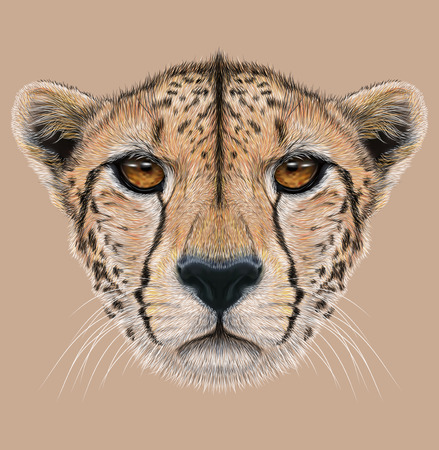 Illustrative Portrait of a Cheetah. The cute face of a Cheetah.