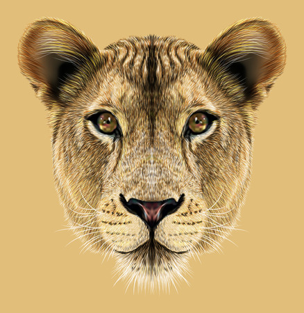 hand drawing: Portrait of Lioness. African big cat.