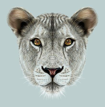 big cat: Portrait of Lioness. African big cat.