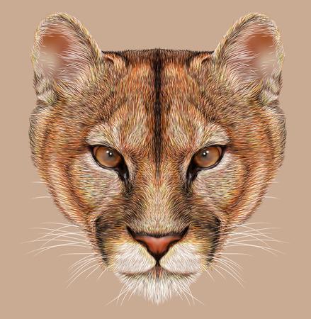 Portrait of Mountain Lion. Cuguar Cat. 写真素材